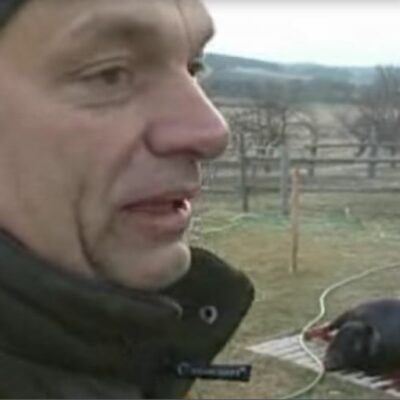 Orbán nem nőtte ki a felcsúti disznóólat